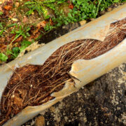 The curse of the clogged sewer line